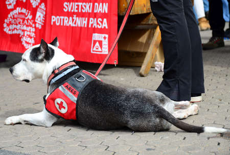 important people: Zagreb, Croatia. 26th Apr, 2014. Croatian rescue dog associtaion opened a booth at Ban Jelacic Square where people could hang out with a rescue dogs and find information how much rescue dogs are important.