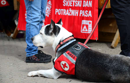 hang out: Zagreb, Croatia. 26th Apr, 2014. Croatian rescue dog associtaion opened a booth at Ban Jelacic Square where people could hang out with a rescue dogs and find information how much rescue dogs are important.