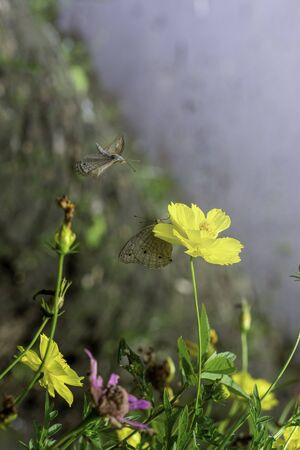 Fantasy tropical butterfly appearing in dreams
