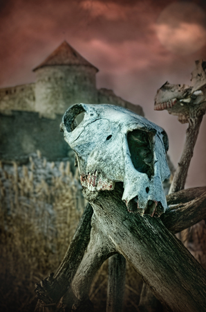 Gothic skull of a horse on a tree near the old fortress photo