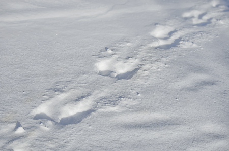 background animal footsteps on the snow. Trendy selective focus with shallow depth of field Zdjęcie Seryjne