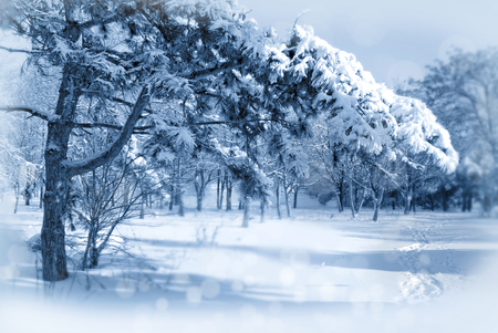 Christmas New Year winter background with snowy fir trees