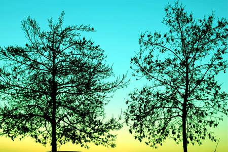 hojas: Dos arboles