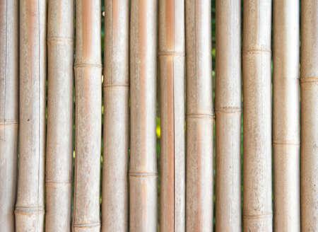 Bamboo symmetry  in japan 写真素材