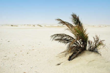 Lonely bush in a desert Stock Photo - 13029757
