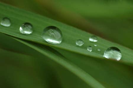 Rain drops on green grass photo