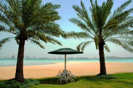 Palms on a beach in Qatar Stock Photo - 13275508