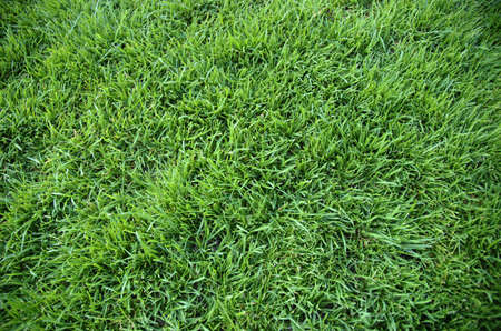 Abstract green grass background texture Stock Photo - 13542195