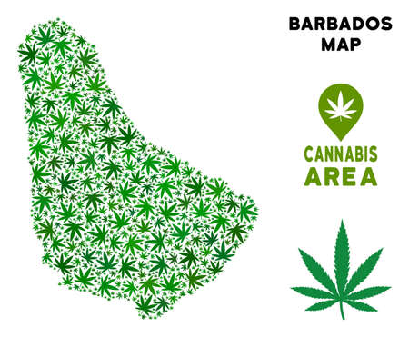 Weed Barbados map collage of marijuana leaves. Narcotic addiction concept. Vector Barbados map is formed with green weed leaves. Abstract territorial scheme in green color tints.