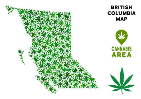 Cannabis British Columbia Province map composition of marijuana leaves. Narcotic addiction concept. Vector British Columbia Province map is created of green weed leaves.