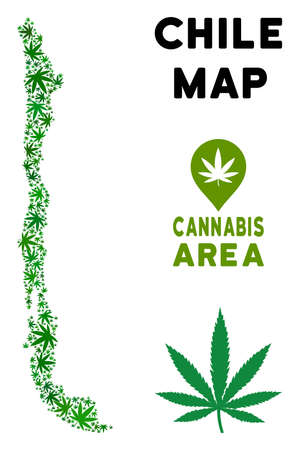 Cannabis Chile map composition of marijuana leaves. Narcotic distribution concept. Vector Chile map is made of green grass leaves. Abstract geographic scheme in green color tones. Illustration