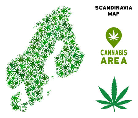 Cannabis Scandinavia map collage of marijuana leaves. Narcotic addiction template. Vector Scandinavia map is shaped of green grass leaves. Abstract geographic plan in green color tinges.