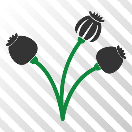 Opium poppy plant vector pictogram. An illustration style is a flat iconic symbol on a hatch transparent background.