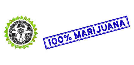 Mosaic beef certificate seal and grunge stamp seal with 100% Marijuana phrase. Mosaic vector beef certificate seal is formed with scattered rectangles. 100% Marijuana stamp seal uses blue color. 向量圖像