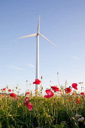 field of poppies and wind turbine with blue sky in background