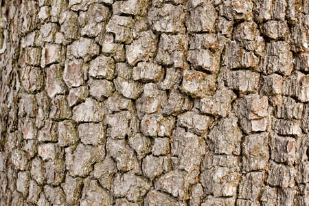 bark of old apple tree in closeup Stock Photo - 16427002
