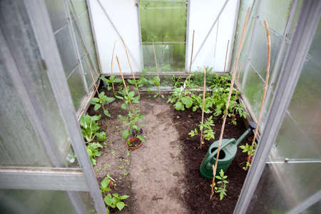 young plants and watering can in small greenhouse photo