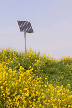 rapeseed and solar panel with blue sky photo
