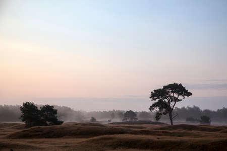 utrecht: morning mist on landscape of utrechtse heuvelrug near utrecht