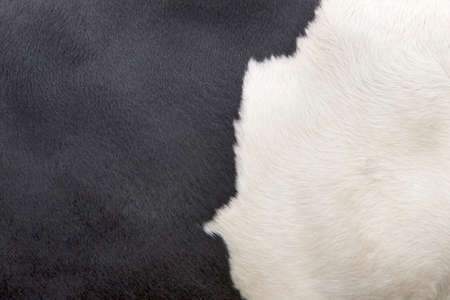 cow skin: part of the pattern on hide of black and white cow