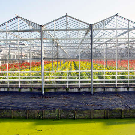 greenhouse full of blossoming flowers in holland with blue sky photo