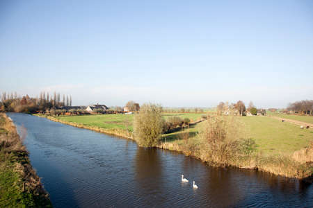 ijssel: swans in the Hollandse ijssel near achthoven in the green heart of Holland Stock Photo