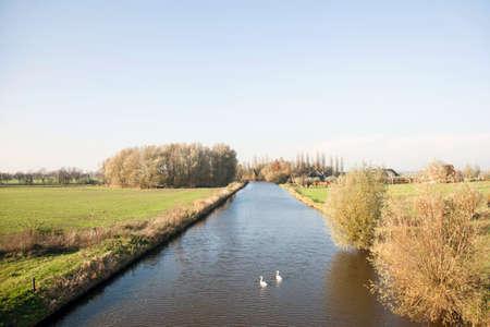 ijssel: swans in the Hollandse ijssel near Montfoort in the green heart of Holland Stock Photo