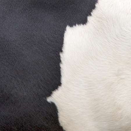 square part of the pattern on hide of black and white cow that symbolises the difference between black and white photo