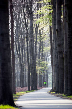 austerlitz: man on bicycle on track in beech forest in spring Stock Photo