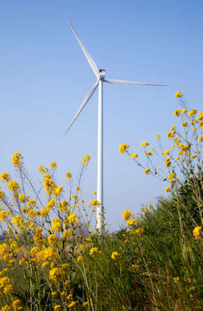 yellow rapeseed in foreground of wind turbine against blue sky photo