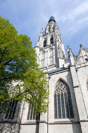 breda: tower of breda cathedral in the netherlands and green tree in spring sunshine Stock Photo