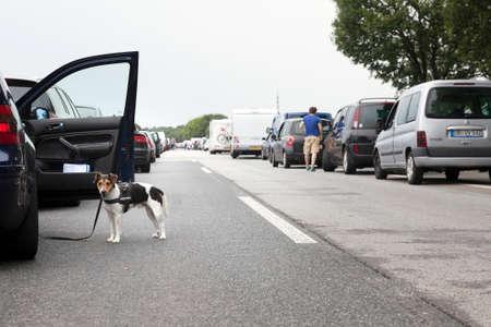 bottleneck: dog next to car during traffic jam on motorway in germany