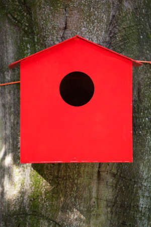 single dwellings: red birdhouse tied to beech tree with orange rope