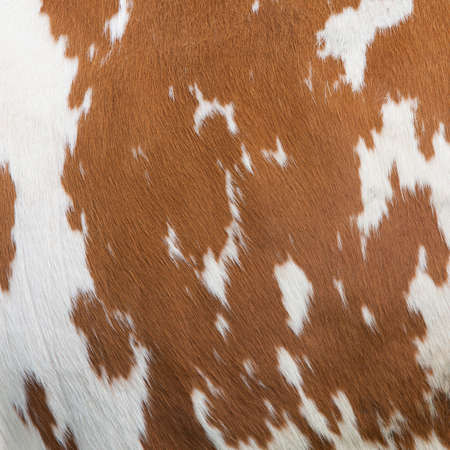 cow skin: side of cow with red brown pattern on white hide