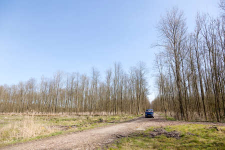 flevoland: blue van between thin trees of forest in dutch province of flevoland and blue sky in early spring Stock Photo