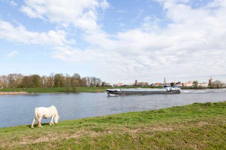 Witte paard weidt op rijn talud tegenover het bolwerk Wijk bij Duurstede in Nederland tijdens het vrachtschip passeert Stockfoto - 57636148