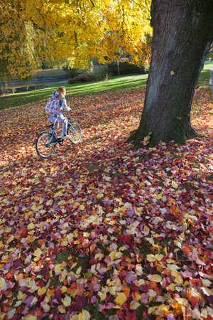 dutch girl: dutch park with girl on bike in colorfull autumnal maple leaves in the fall