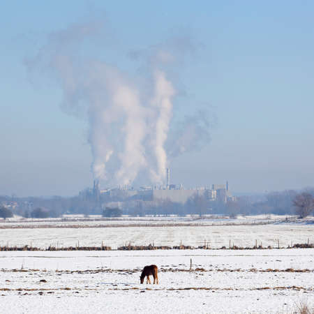 paper mill factory parenco at Doorwerth near Arnhem in the netherlands on winter day with snow and blue sky and horse in floodplanes of river rhine