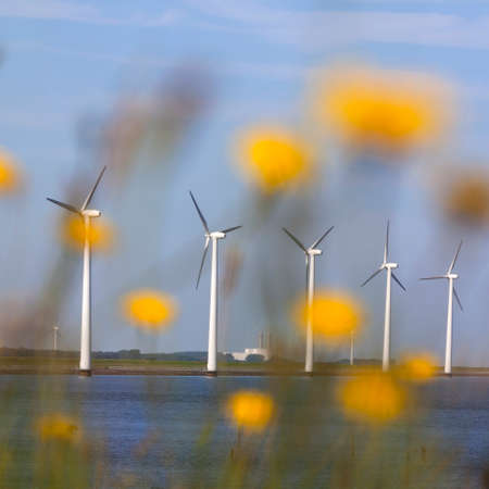 white wind turbines against blue sky off the coast of flevoland in the netherlands on sunny day seen through yellow flowers Stock Photo