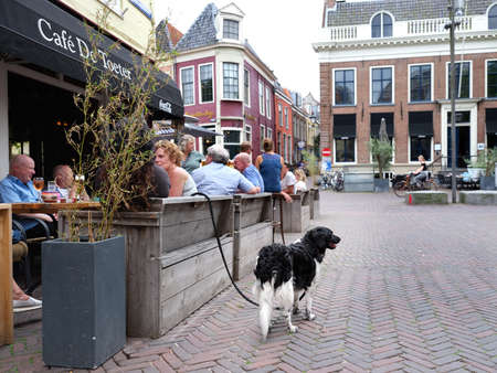 People enjoy drinks at outdoor cafe in the center of old city Leeuwarden in friesland with waiting dog on a leash Editorial