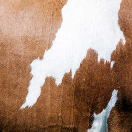 cowhide with abstract brown and white pattern on side of cow Stock Photo