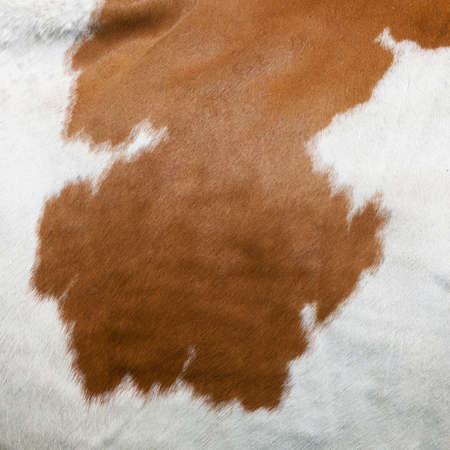 cowhide with abstract red and white pattern on side of cow Stock Photo
