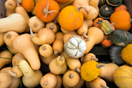 closeup of several  pumpkins in different forms and colors Stock Photo