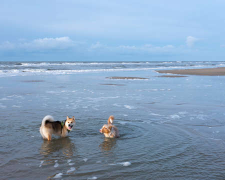 dogs on sunny winter beach at north sea in holland