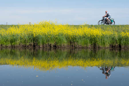 couple rides bicycle along water of valleikanaal near leusden in the netherlands and passes yellow blooming flowers of rapeseed