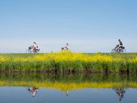 family rides bicycle along water of valleikanaal near leusden in the netherlands in spring and passes yellow blooming flowers of rapeseed