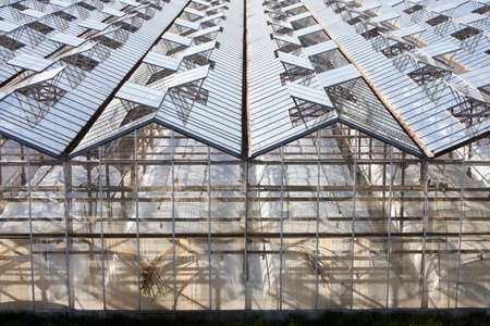 abstract architectural structure of glass and metal greenhouses in the netherlands