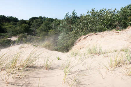 summer storm blows sand into the air in dutch dunes near den haag
