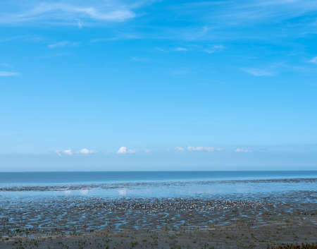 low tide attracks lots of birds on the waddenzee in the north of dutch province friesland under blue sky
