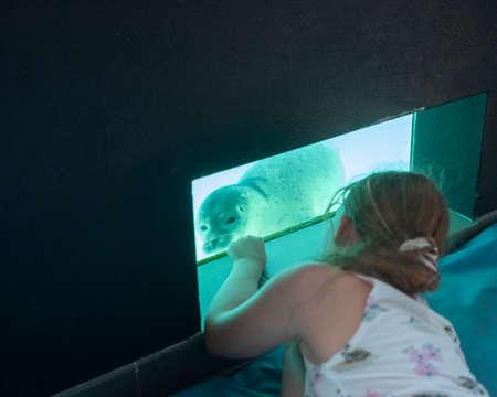 young girl looking close at curious seal in pieterburen